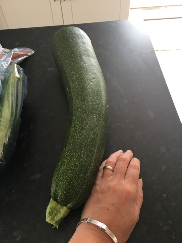 HUGE courgette picked the next day